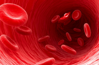 Эритроциты в крови понижены
