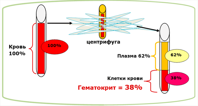 Общий анализ крови на гематокрит