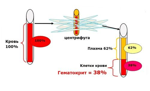 Определение гематокрита в лаборатории
