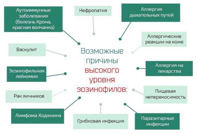 Причины повышения эозинофилов