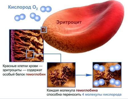 Что такое эритроциты в анализе крови и как его снизить thumbnail