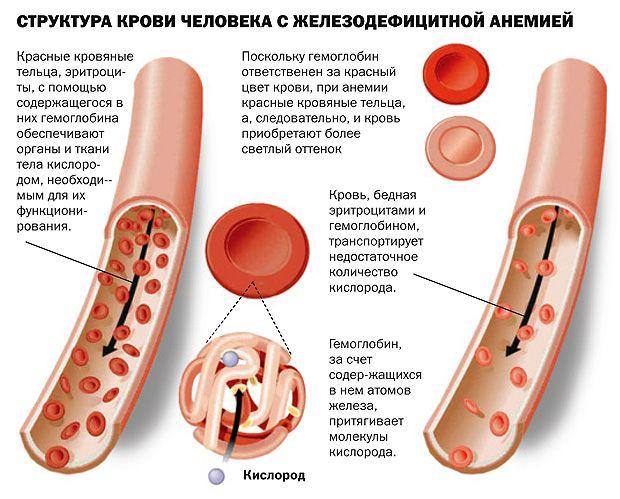 Как низко может упасть гемоглобин thumbnail