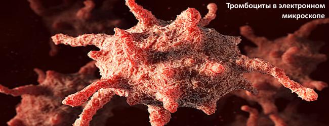 Тромбоциты в электронном микроскопе